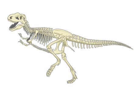 Illustration pour illustration of tyrannosaurus T rex skeleton - image libre de droit