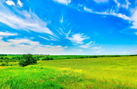 Photo pour Field of bright fresh green grass and blue sky - image libre de droit