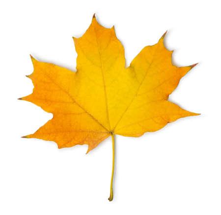 Photo pour Orange maple leaf isolated on a white background - image libre de droit