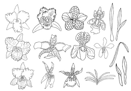 Illustration pour Hand drawn set of orchid flowers and floral elements. Isolated on white. Black and white vector illustration. - image libre de droit