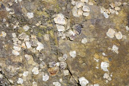 Shells in rocks