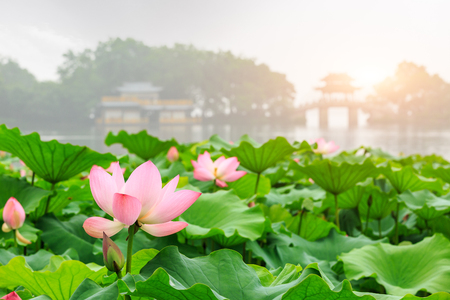 Zhaojiankangphoto160800726