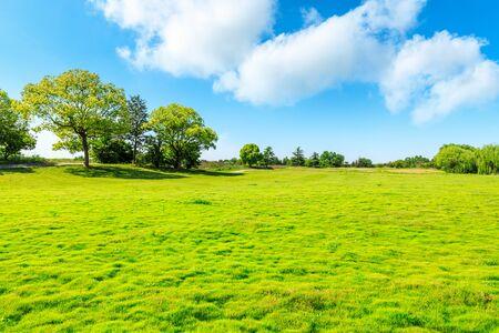Photo pour Green grass and tree under blue sky. - image libre de droit