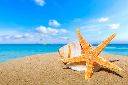 Photo for Starfish and conch on a beach sand, summer holiday background. - Royalty Free Image