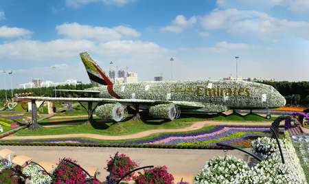 DUBAI, UAE - DECEMBER 8, 2016: Dubai Miracle Garden: The world's biggest natural flower garden. Structure forming the shape of the Airbus A380.
