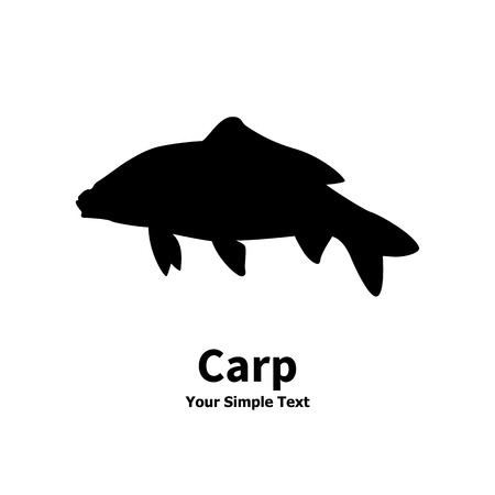 illustration of a isolated silhouette of carp fish on white background.