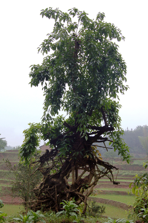 Zhoushihua151200244