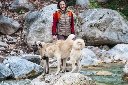A woman walks with two Caucasian Shepherd dogs in the forest. A girl with a backpack crosses the river. Brunette walking a dog. Training pets. Companion for travel.