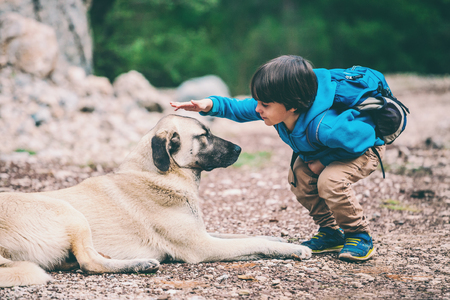 Photo pour A boy with a backpack walks with the dog through the park. The child is petting the dog. Shepherd goes with its owner in the woods. Friendship pet and child. - image libre de droit