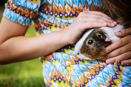Little girl lying on grass and petting guinea pig.の写真素材