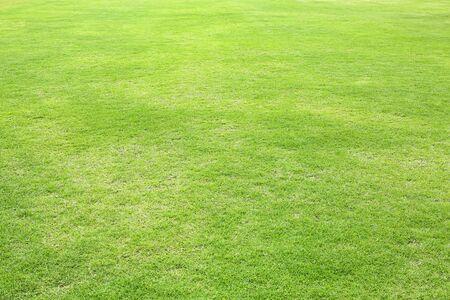 Photo pour Natural green trimmed grass field background for sports. - image libre de droit