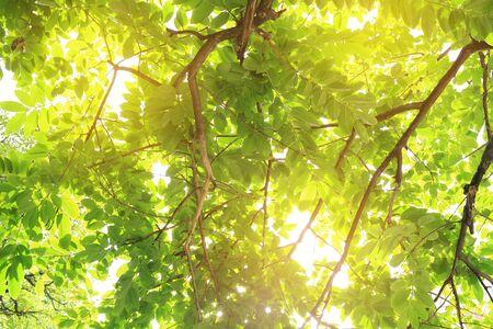Foto de The sun shines through the trees in the forest. - Imagen libre de derechos