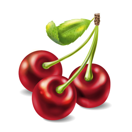 Bunch of three cherries with stems and leaf. Vector illustration isolated on white background. Suitable for advertising yogurt, ice-cream, juice, jam, desserts.