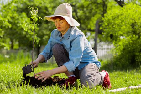 Wearing summer hat. Appealing aged woman wearing summer hat digging ground near just planted tree