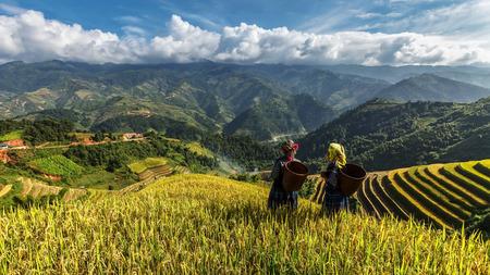 Farmers in Rice fields on terraced of Mu Cang Chai, YenBai, Vietnam