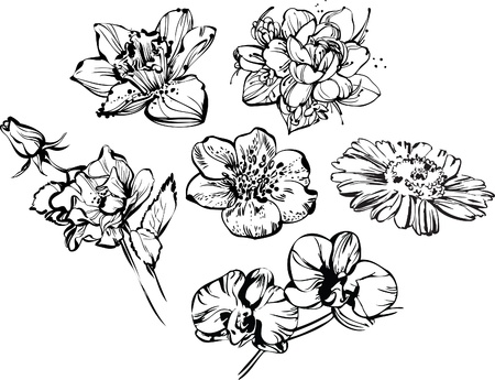 black and white drawing of beautiful composition of flowers