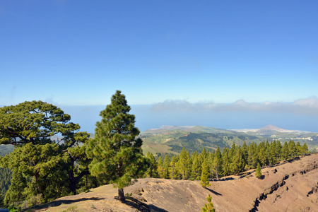 Pine forest on ridge of the caldera de los Pinos  against rural landscape  Gran Canaria, Spain