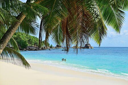 Photo pour A palm tree bends over a sandy beach on Seychelles islands. Mahe, Anse Soleil. Couple of tourist in the ocean - image libre de droit