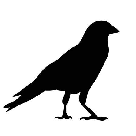 Illustration pour silhouette of crows, birds - image libre de droit