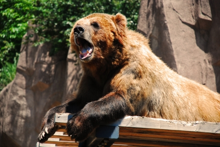 Bear at a zoo