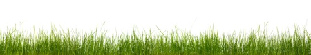 Photo pour Extra large horizontal strip of grass, dirt, and roots isolated on white background. - image libre de droit
