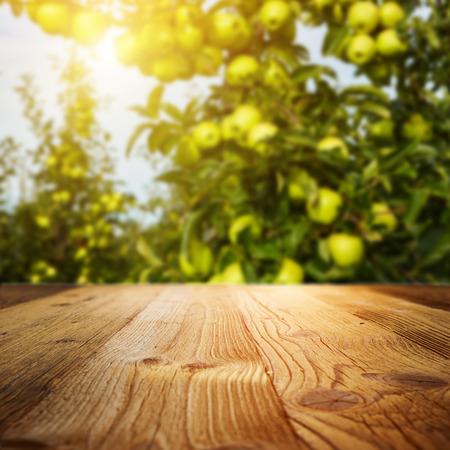 autumn apple orchard background