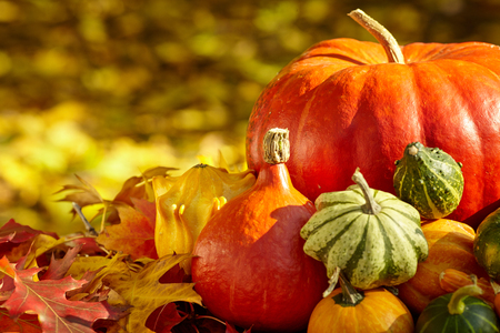 Photo for Autumn season decoration with pumpkin and foliage maple leaves - Royalty Free Image