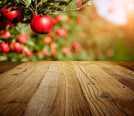 Photo pour table space and apple garden of trees and fruits  - image libre de droit