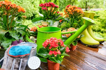 Foto für Spring plants and garden tools frame or border over rustic wood with copy space with gloves, watering can, flowerpots, soil, trowel and seedlings for transplanting - Lizenzfreies Bild