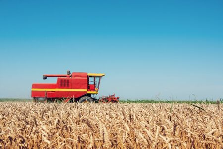 Photo for Combine harvesting in a field of golden wheat. - Royalty Free Image