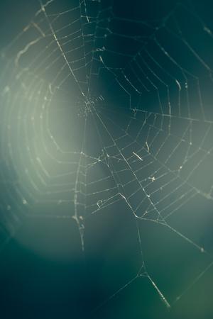Foto de Close up of spider web with blurred background - Imagen libre de derechos