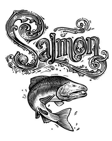 Illustration for Salmon, vector logo and illustration. Vintage graphics and handwork. Drawing with an ink pen and pencil. The salmon jumps out of the water and a vintage logo. A collection of beautiful logo and words. - Royalty Free Image