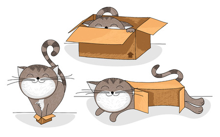 Cute and funny cartoon cat in different sized cardboard boxes