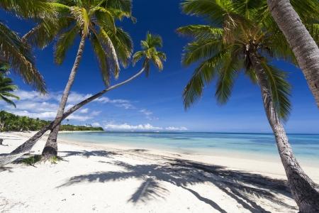 Tropical Paradise On Fiji Island