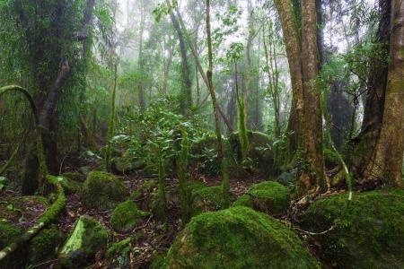 Lush Australian Rainforest Wallpaper Mural
