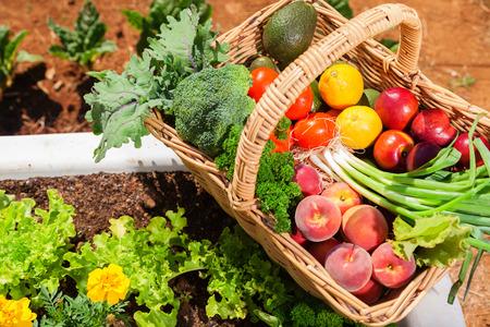 Foto für Basket of fresh organic fruit and vegetables in garden - Lizenzfreies Bild