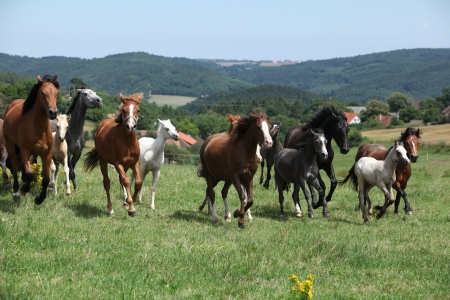 Herd of running horses on pasturage with some trees on the backround