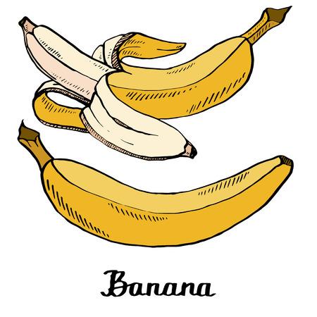 Illustration pour Vector cartoon calligraphy coloured bananas poster for t-shirt, textile, web, icon, card, craft - image libre de droit