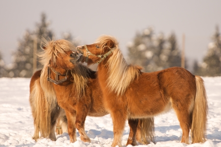 Two Horses Playing In The Snow