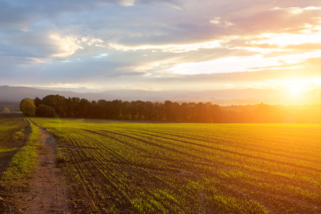 Photo pour Beautiful sunset over the green large field - image libre de droit