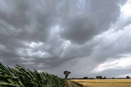 Large view on the dark sky above the green corn field