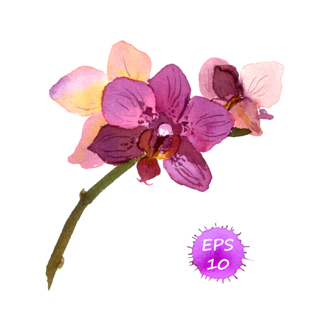 Illustration pour One isolated flower of orchid, hand drawing watercolor - image libre de droit