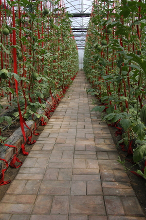 Fruits and vegetables, is a new breed Hangzhou Xiaoshan a farm cultivation, scientific cultivation yields significantly improved, so that the increase farmers income.