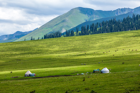 Photo pour grassland in Xinjiang - image libre de droit