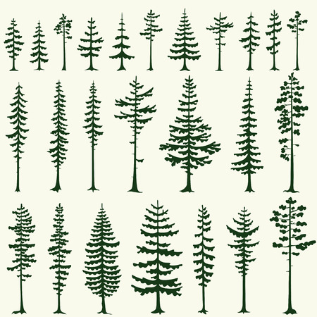 Illustration pour Set of stylized pine silhouettes. Vector illustration. - image libre de droit