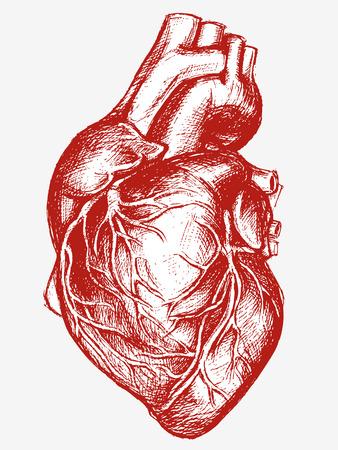 Illustration pour Human Heart Drawing line work - image libre de droit
