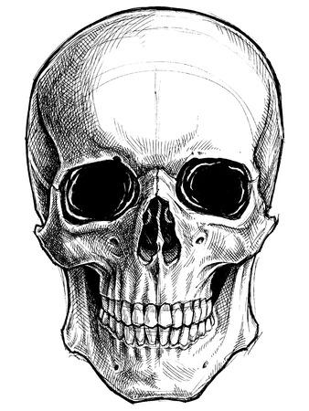 Ilustración de Skull Drawing line work vector - Imagen libre de derechos