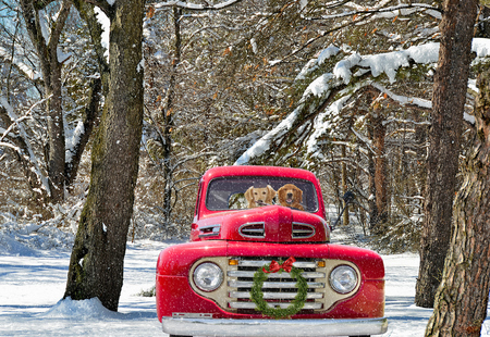 Foto de golden retrievers in red old truck with holiday wreath - Imagen libre de derechos