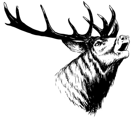 Ilustración de hand drawn image of big white tail buck head with large antlers white-tail deer vector illustration animal isolated on white background for hunting products billboards website, wildlife sketch clipart - Imagen libre de derechos