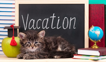 Tired kitten with school accessories waits for vacation